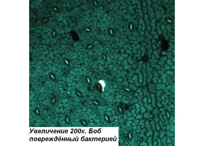 Микроскоп Optika B-192