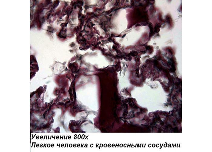 Микроскоп Optika M-100F LED
