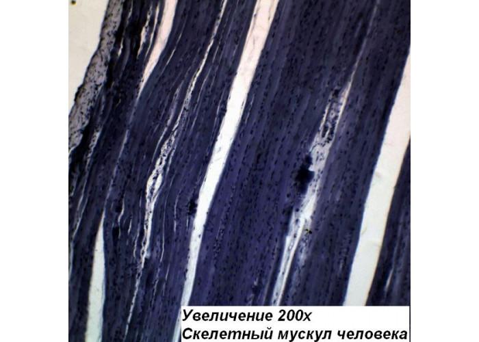 Мікроскоп Optika M-100FLED